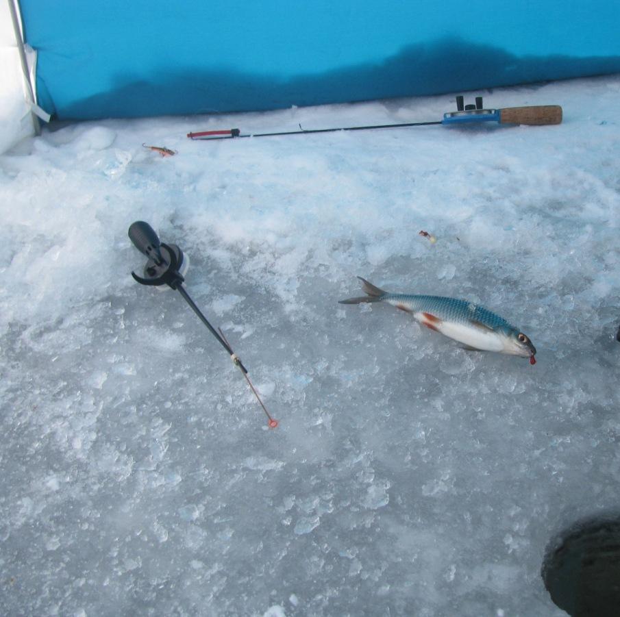 Начинающему рыболову имеет смысл купить зимние удочки нескольких типов, для разных способов ловли.
