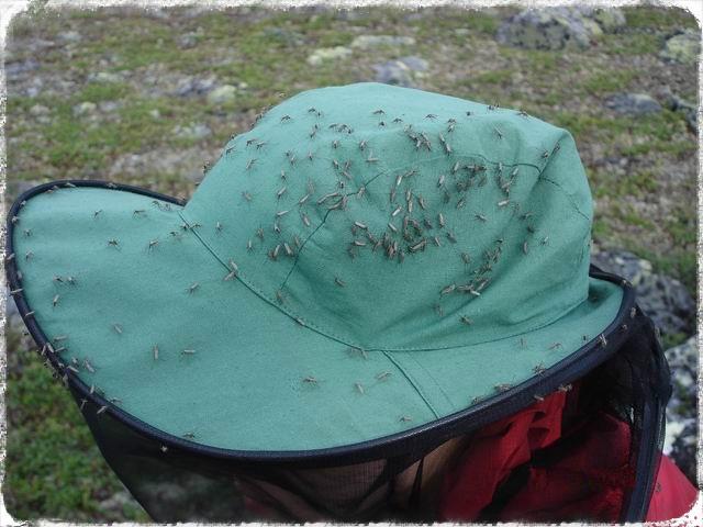 Купить накомарник- значит спасти себя от назойливых насекомых.