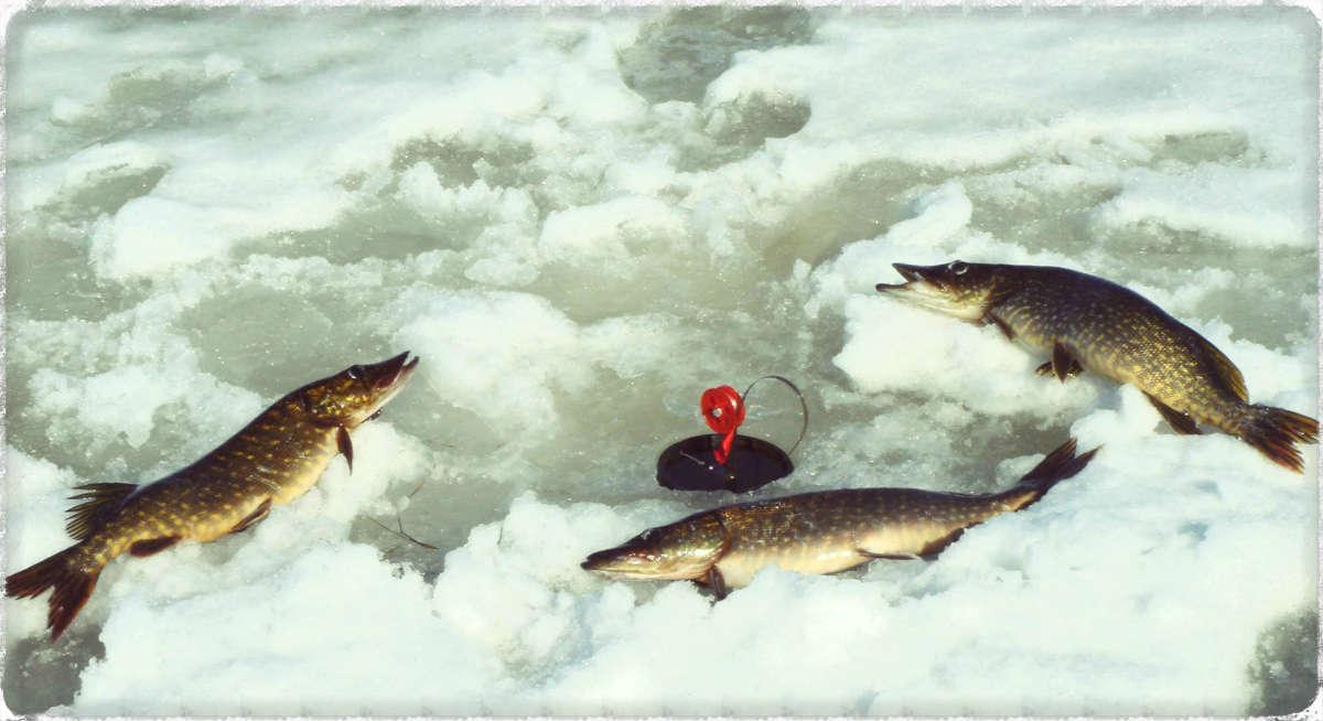 Ловля щуки на жерлицы зимой - увлекательна и интересна.